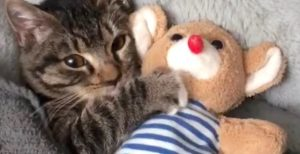 Young cat cuddles plush toy in bed