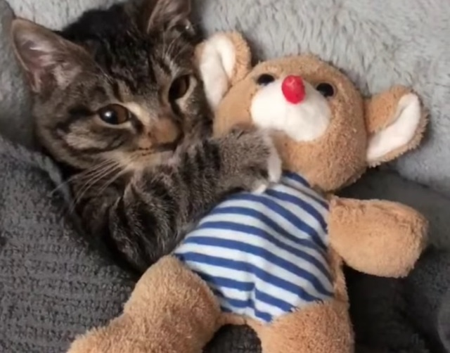 Young cat cuddles plush toy in bed. Screenshot.