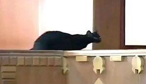 Black cat enters debating chamber of Kenyan Parliament. See what happens.