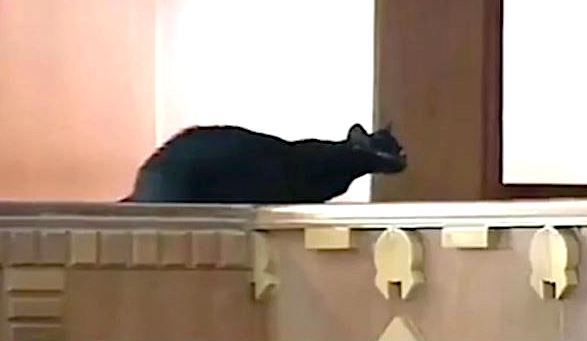 Black cat enters debating chamber of Kenyan Parliament. See what happens.