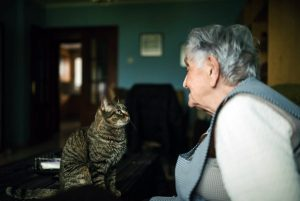 Cat retirement communities: A good choice for your cat when you're no longer able to provide care