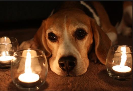 Dog and candle