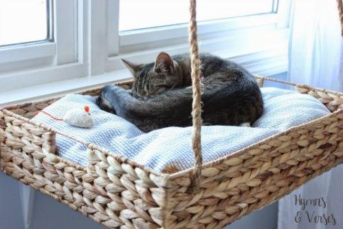 Indoor cat by the window