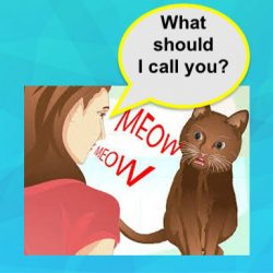 Cat named 'Meow'