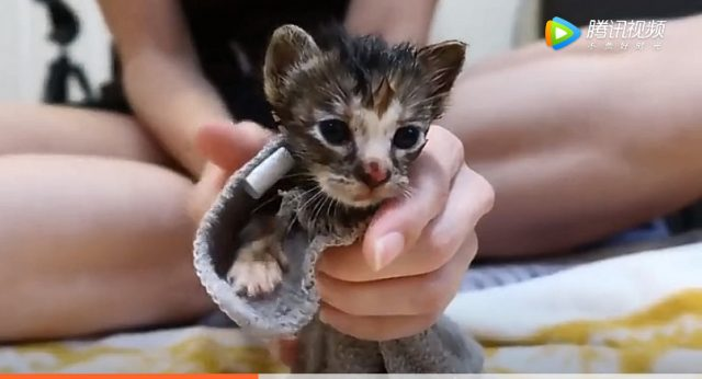 Newborn kitten rescued