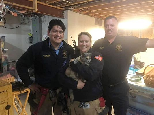 Cat named Noelle rescued by firefighters from underground concrete space beneath a chimney