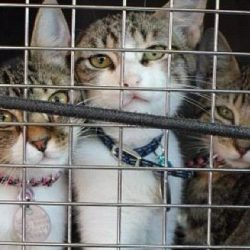 Three unwanted cats from the south ending up north