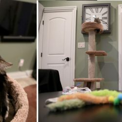 Apartment for 2 cats in San Jose