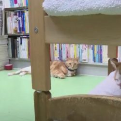 Bookstore cats Hong Kong are rehomed