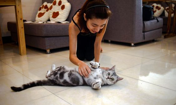 Cat cafe in China