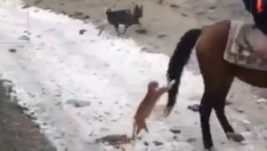 Cat grabs horse's tail and hangs on as horse gallops off