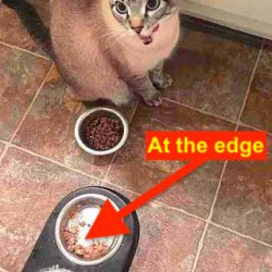 Cat leaves food at the edges of the bowl