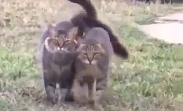 Cats show affection for each other