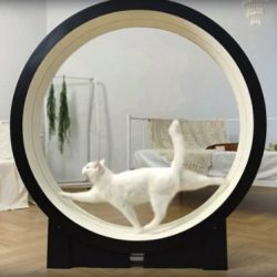 Classy cat treadmill