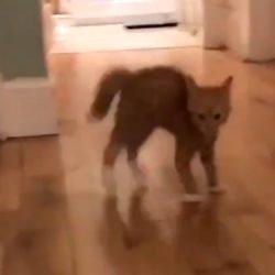 Defensive cat body language video
