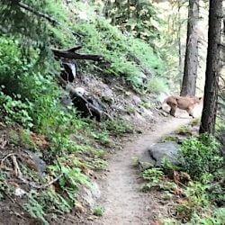 Encountering a mountain lion in California