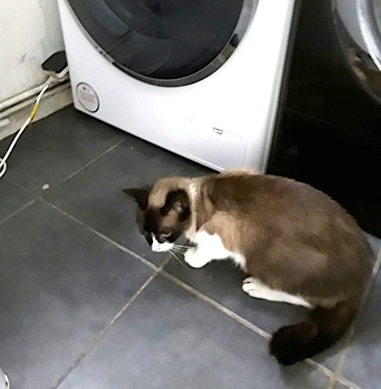 Gracie next to the washing machine