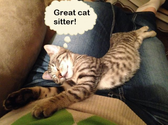 Great cat sitter