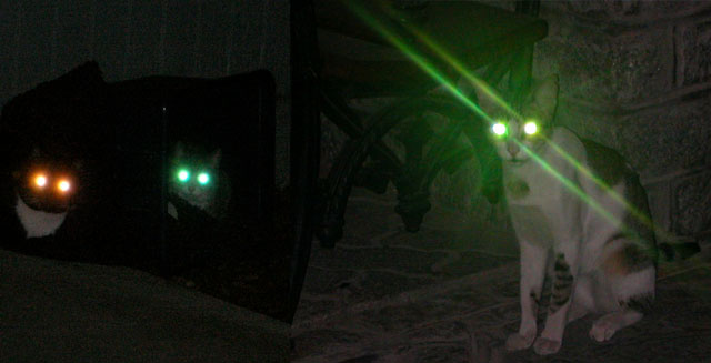Green light glowing from the reflective layer at the back of cats' eyes