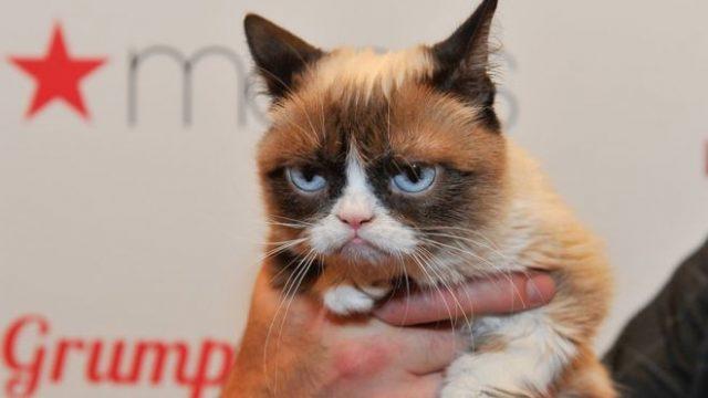 Grumpy cat looking grumpy in part due to her glowering eyes