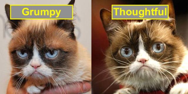 Grumpy cat looking thoughtful not grumpy