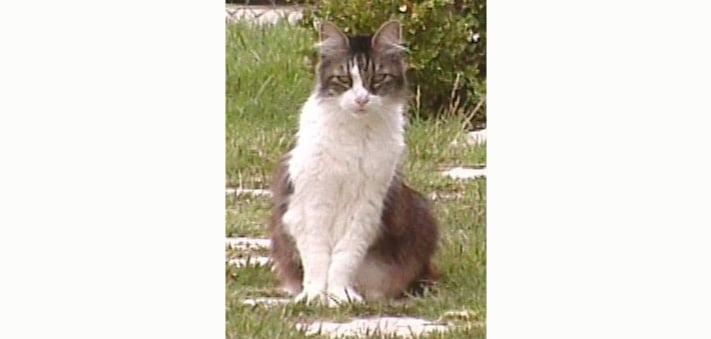 Hippy a NFC cat