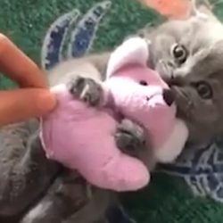 KItten defends his prey from human