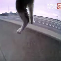 Kitten rescued from highway by police officer