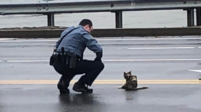 Officer assists injured cat in road