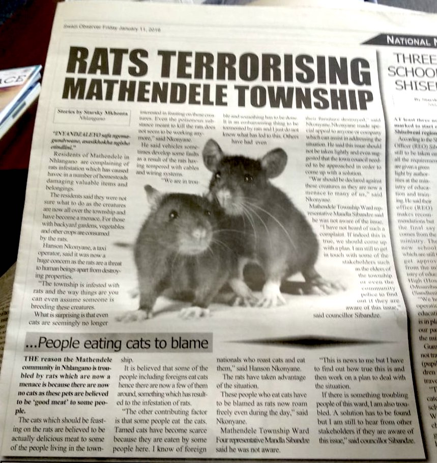 People eating cats leads to rat infestation in Swaziland