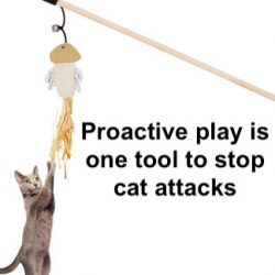 Proactive play with cats to prevent attacks on owners