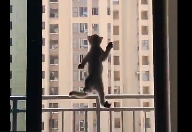 Spider kitten climbs window