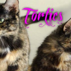 Torties are female