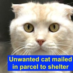 Unwanted cat mailed to shelter