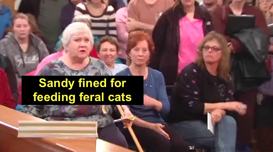 Woman fined for feeding feral cats