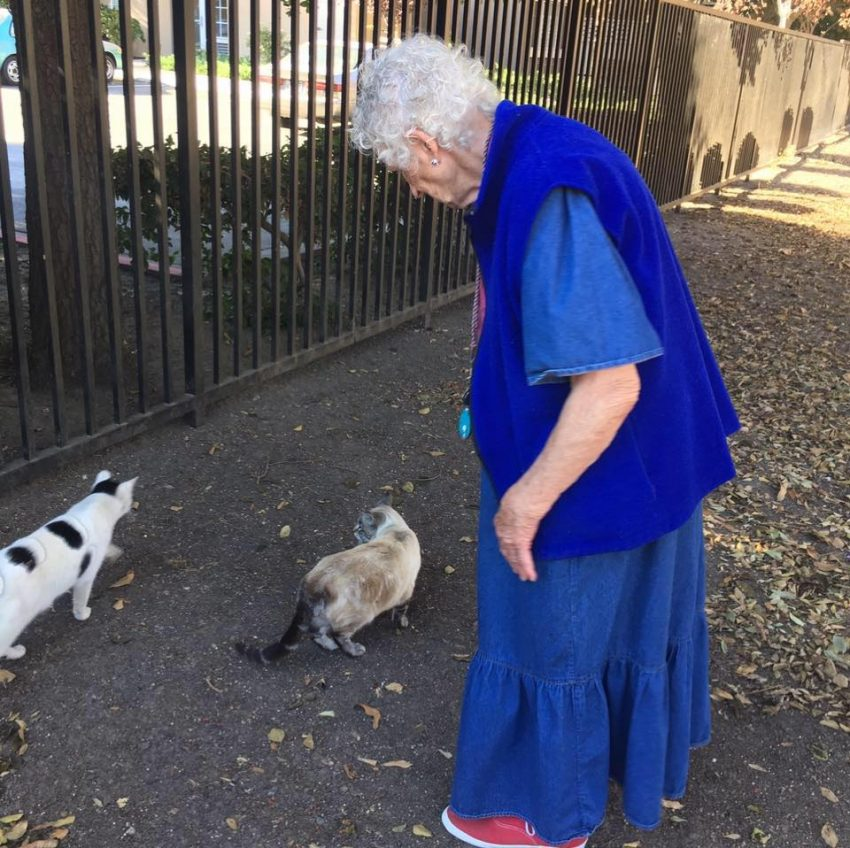 Yvonne 88 year old fed abandoned cats near her old people's home until assistance came along