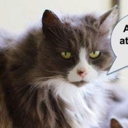 Aloof cat?