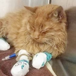 Facebook: California Wildfires Pets has rescue photos of 592 cats and 210 dogs
