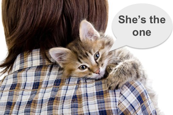 Cat chooses person