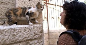 Cat lover in Jerusalem