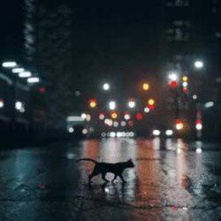cat road night danger