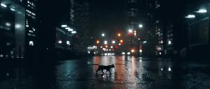 Cat on road at night can be dangerous for the cat depending on the area