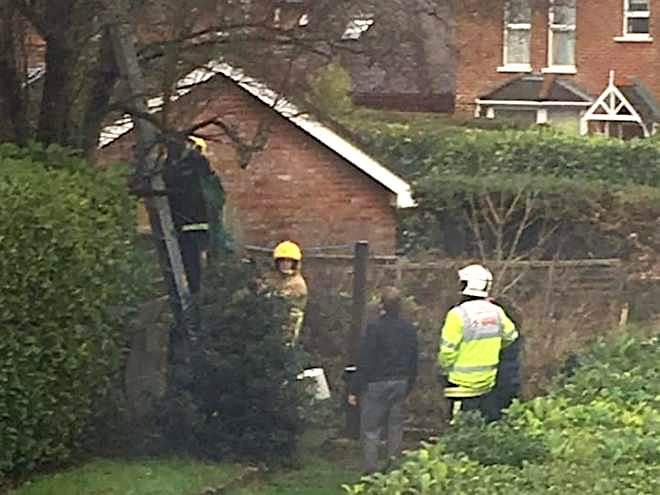 Harry a cat being rescued from a tree with his owner by firefighters