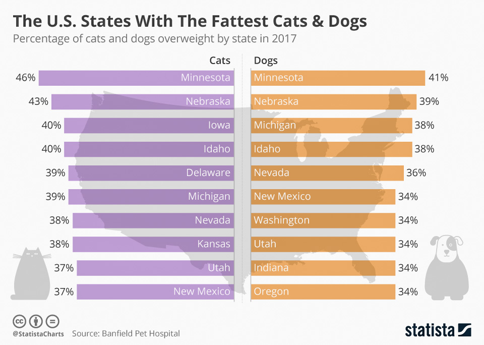 Fattest cats (I mea cats not rich people) in the USA come from Minnesota