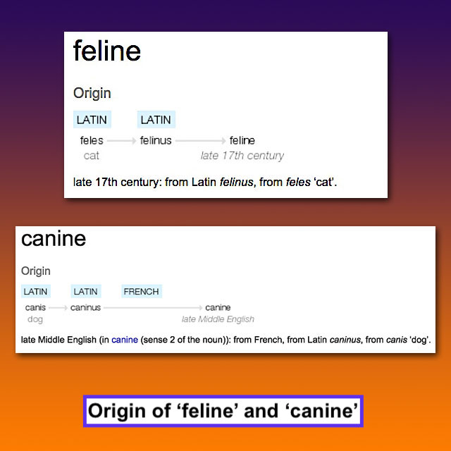 Origin of words 'feline' and 'canine'