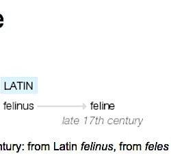 feline origin