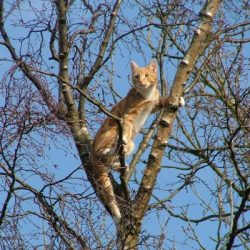 Ginger cat in tree
