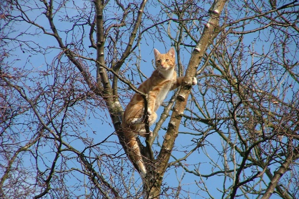 Ginger cat in tree