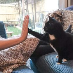 Rescue cat who had a frightening life learned to trust and show affection again