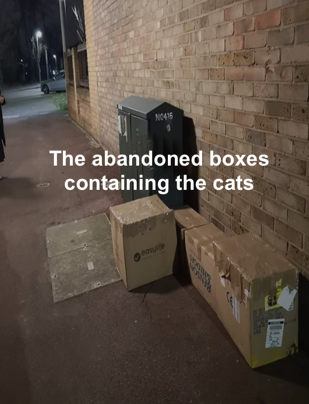 The abandoned cats in four sealed boxes